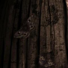 'Mamá', el terror según Guillermo del Toro