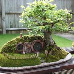 El bonsái de Bolsón Cerrado
