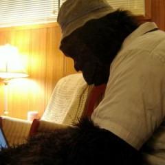 Feliz Día Mundial del Disfraz de Gorila