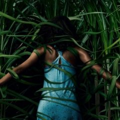'En la hierba alta', jugando en los campos del Sr. King